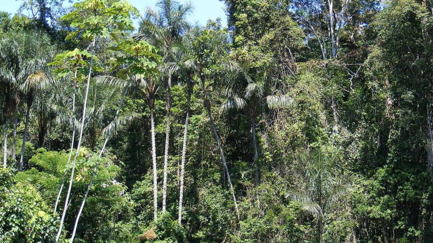 Тропические леса Бразилии превратились в источник углекислого газа