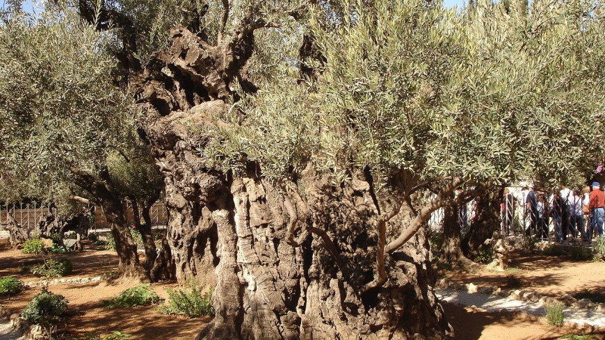 В Гефсиманском саду нашли остатки бани возрастом 2000 лет