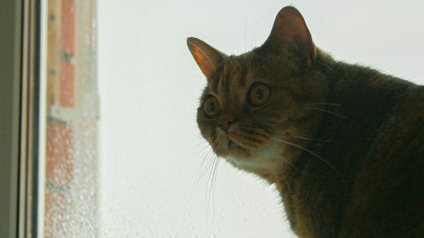 кот, кошка, домашнее животное, животное, фауна,