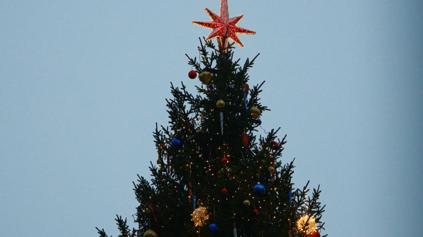 Житель Калининграда украл в центре города новогоднюю елку