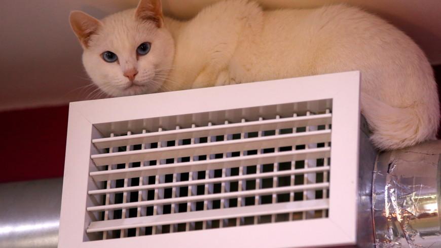 Французский меценат оставил наследство знаменитым котам Эрмитажа