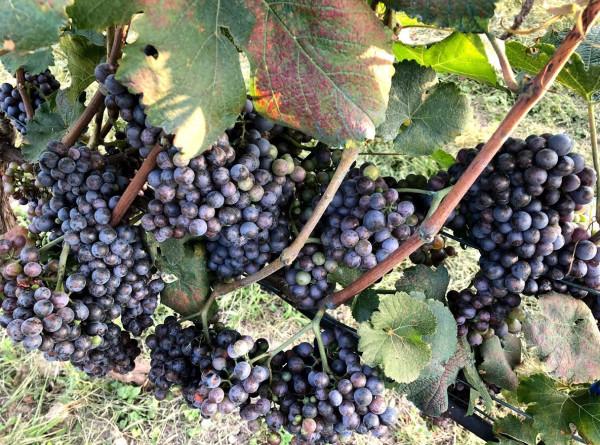 Настоящий колорит: в армянских селах активно развивается агротуризм
