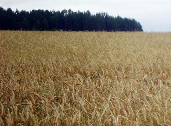 Назарбаева: Агрокомплекс Казахстана станет двигателем развития экономики
