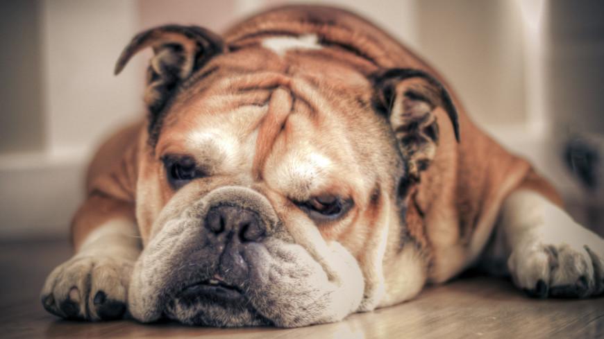 Пес спас семью от отравления угарным газом