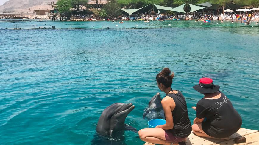 израиль, эйлат, море, пляж, дельфин, вода, млекопитающее, отдых, солнце, пляж, курорт, отпуск, глубина, красное море