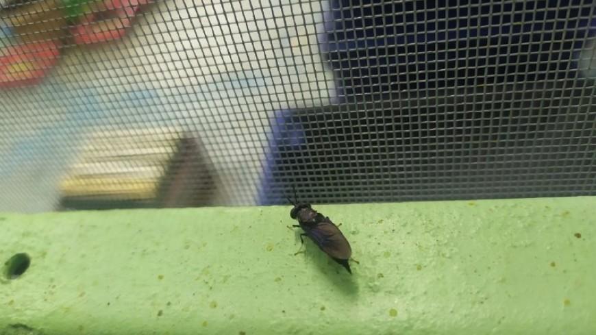 Бизнес на мухах: в Кыргызстане научились делать удобрения и мыло из личинок
