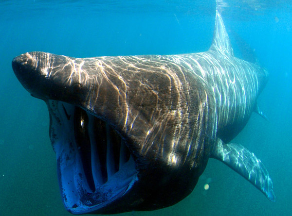 Женщина голыми руками отбилась от агрессивной акулы