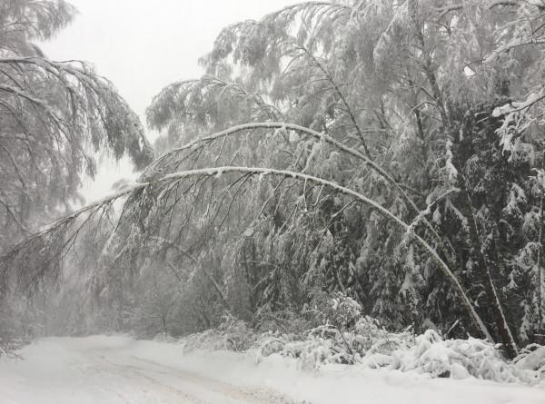 Сразу несколько грузинских сел отрезало от внешнего мира снегом