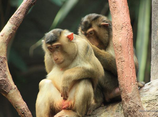 В Индии обезьяна набросилась на развешивающую белье женщину