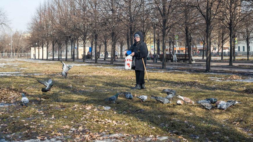 "Фото: Николай Костюшин (МТРК «Мир») ""«Мир 24»"":http://mir24.tv/, голуби, весна, москва, пенсионерка, пенсионеры, пенсионер"