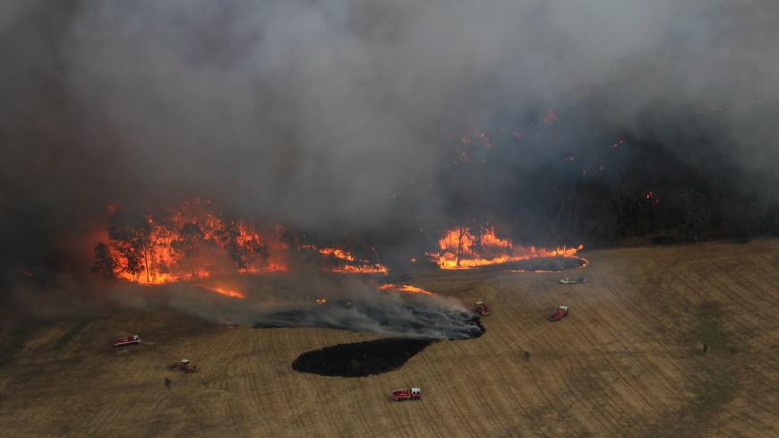 Австралия в огне: три очага объединились в один мегапожар