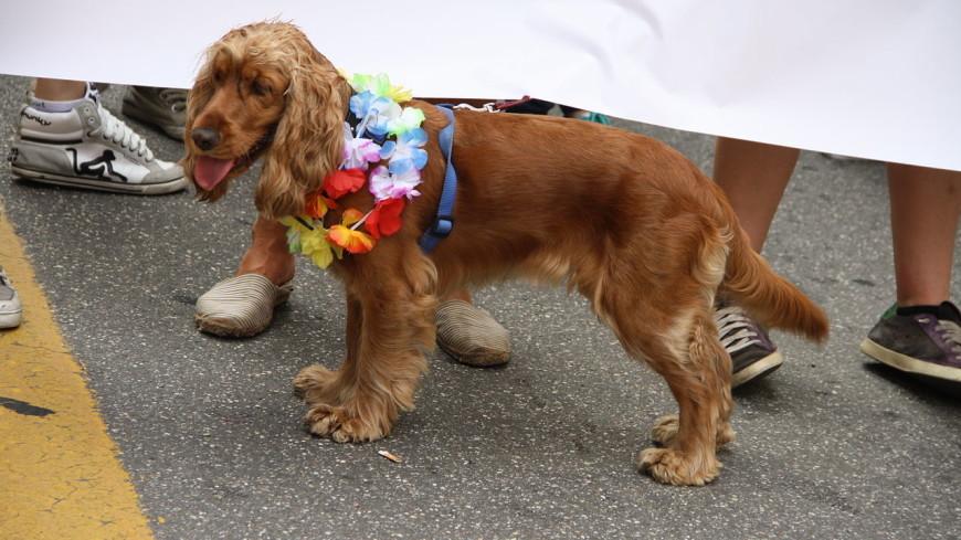 Сотни британцев пришли на последнюю прогулку с умирающей от рака собакой