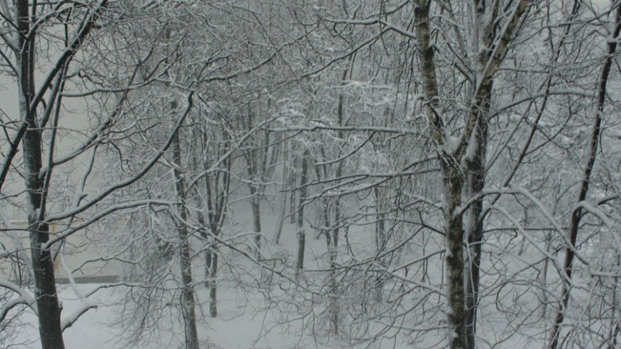 "Фото: Елена Андреева ""«Мир24»"":http://mir24.tv/, метель, зима"
