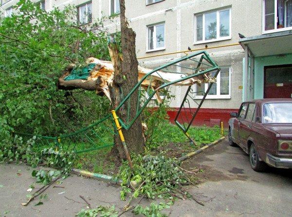 После бури: в Москве и области ветром повалено 130 деревьев