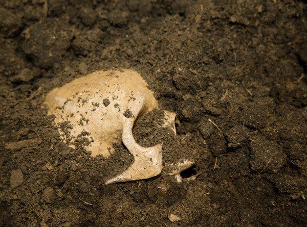 Жертву убийства 2000-летней давности нашли при строительстве дороги