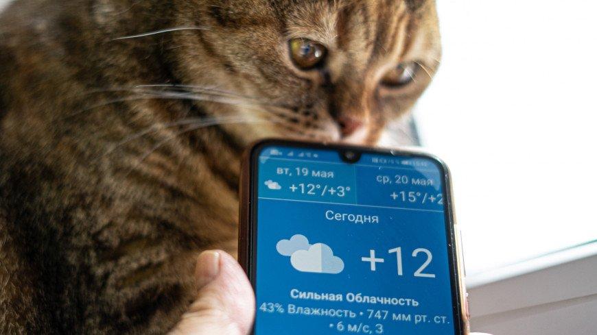 пасмурно, погода, гроза, дождь, погодные условия, облачность, ливень, ураган, непогода, лужа, капли, вода, слякоть, осень, осадки, сырость, град, весна, лето, смартфон, телефон, приложение,, кот, кошка, животное, домашние животные, животные,