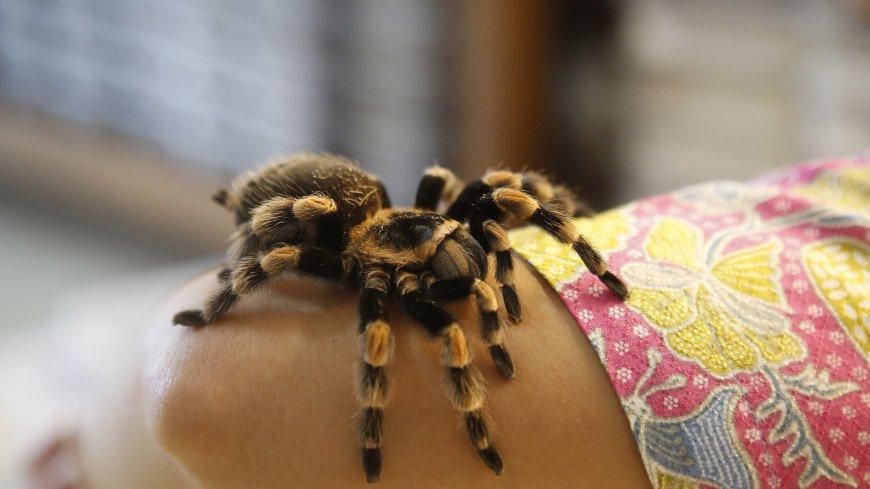 В Австралии открыли новый род тарантулов