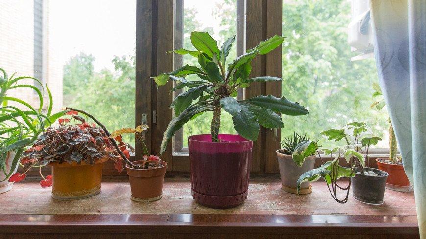 окно, подоконник, цветы, горшок, горшочные цветы, флора, цветок, зелень,