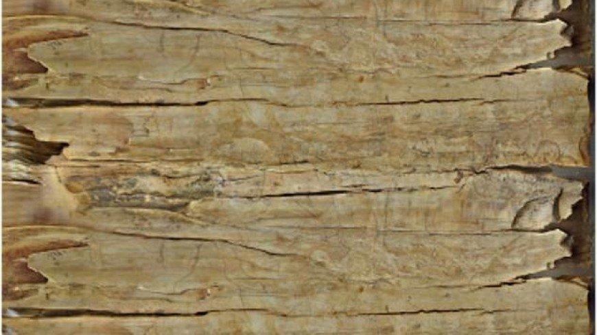 На бивне сибирского мамонта нашли рисунки боевых верблюдов