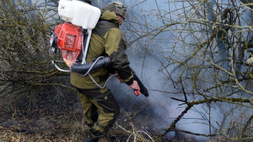 В Башкортостане наградили участников тушения лесных пожаров