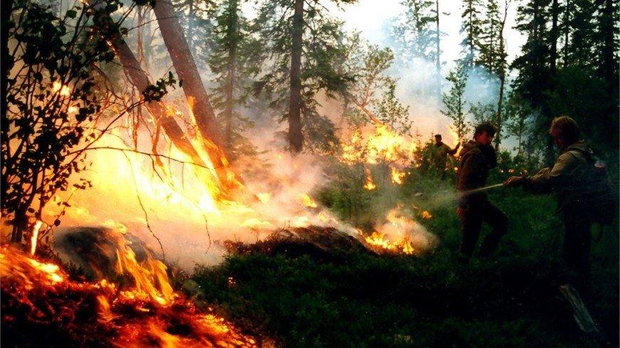 Гидрометцентр: природные пожары в России утихнут к осени