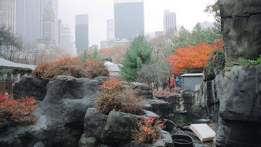 Зоопарк Нью-Йорка извинился за то, что в 1906 году посадил в вольер африканца