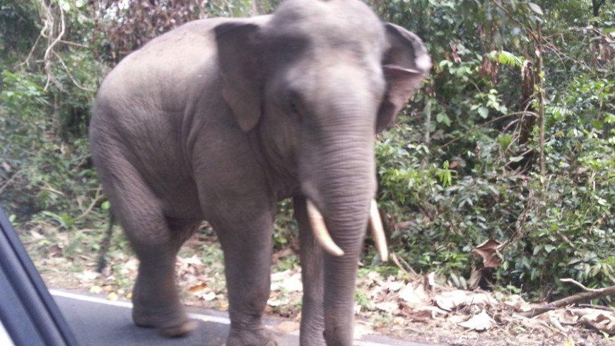 """Фото:  """"«Мир24»"""":http://mir24.tv/, животные, тай, таиланд, слон"""