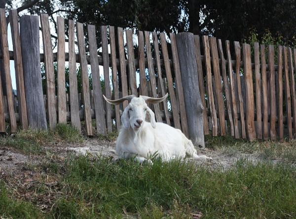 В Челябинской области с отвесной горы эвакуировали пенсионерку с козой