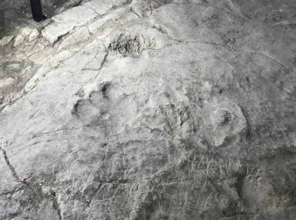 В Кисловодске обнаружили след динозавра