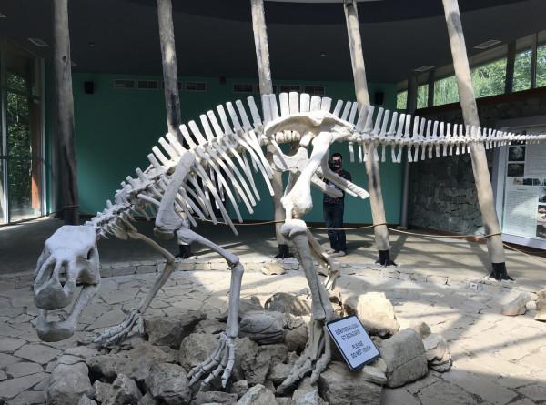 В китайском бомбоубежище заметили следы динозавров