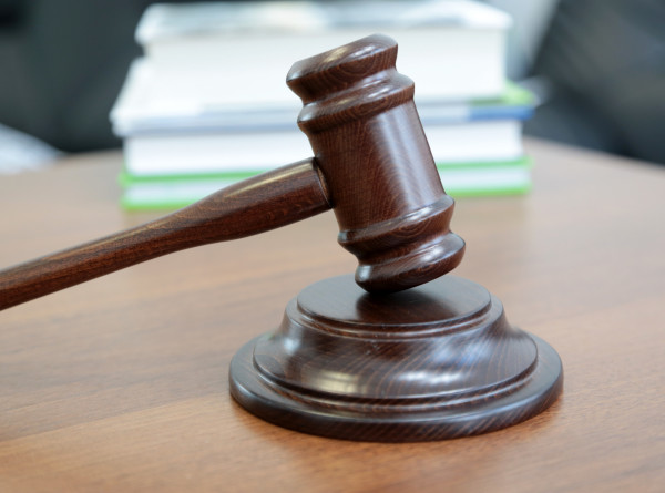 Австралийские активисты подали в суд от лица поссума и выиграли дело
