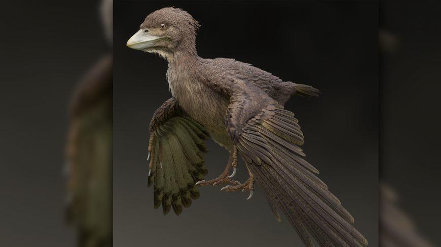 В Японии открыли окаменелость первой примитивной птицы