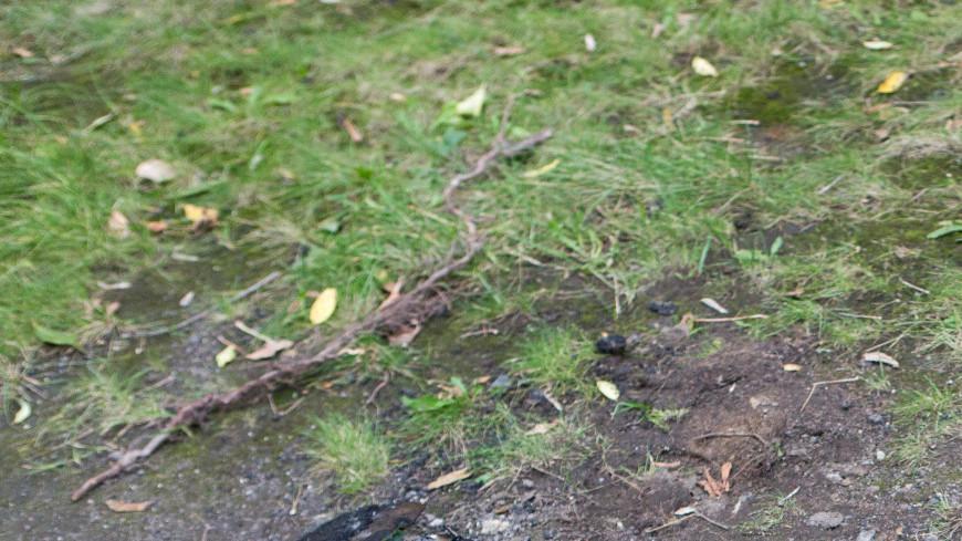 Укладка асфальта осенью,лопата,лопата