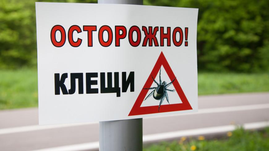 Российские ученые обнаружили опасных клещей-гибридов