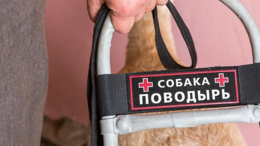 """Фото: Татьяна Константинова, """"«Мир 24»"""":http://mir24.tv/, собаки-поводыри, собаки"""