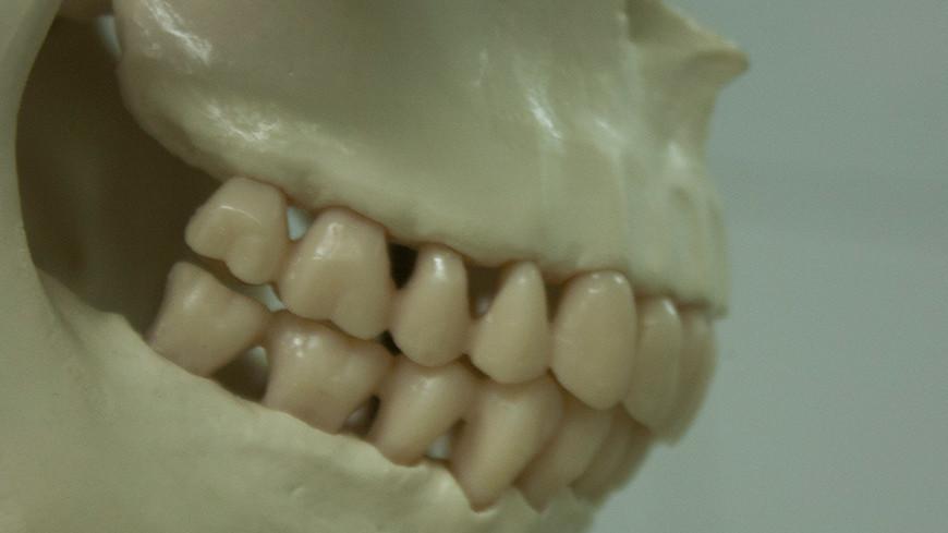 """Фото: Елена Андреева, """"«Мир24»"""":http://mir24.tv/, улыбка, зубы, челесть, стоматология, череп"""