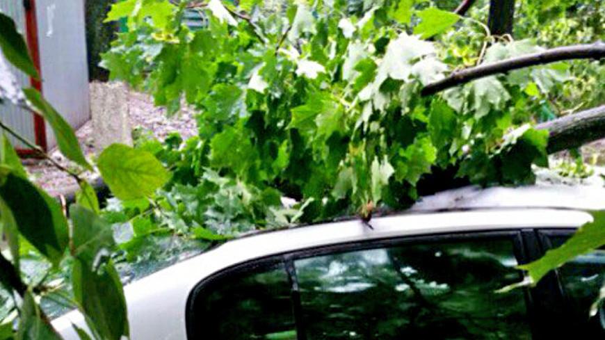 "Фото: Дыкун Марина, ""«МИР 24»"":http://mir24.tv/, машина, упало дерево, дерево, ураган, шторм, ветер"