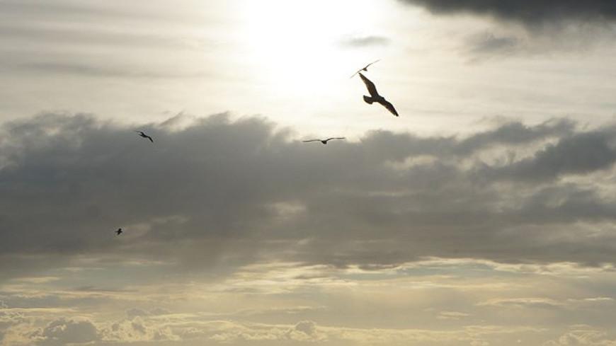 "Фото: Елизавета Шагалова, ""«МИР 24»"":http://mir24.tv/, шторм, море, чайка"