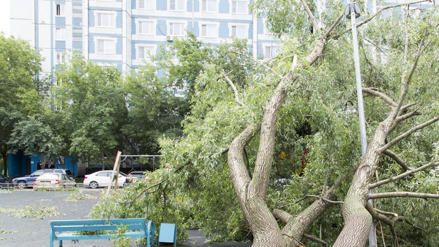 Ветер в Москве повалил больше 30 деревьев