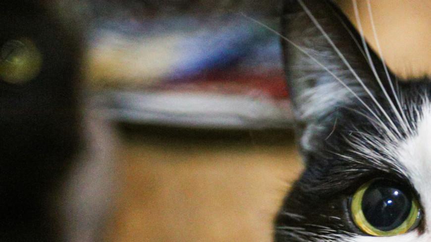 приют, приют для животных, кошачий приют, кошка, кошки, кот, коты, животные, бездомные животные, шерсть, когти, мурчание, домашнее животное, мурлыкание,
