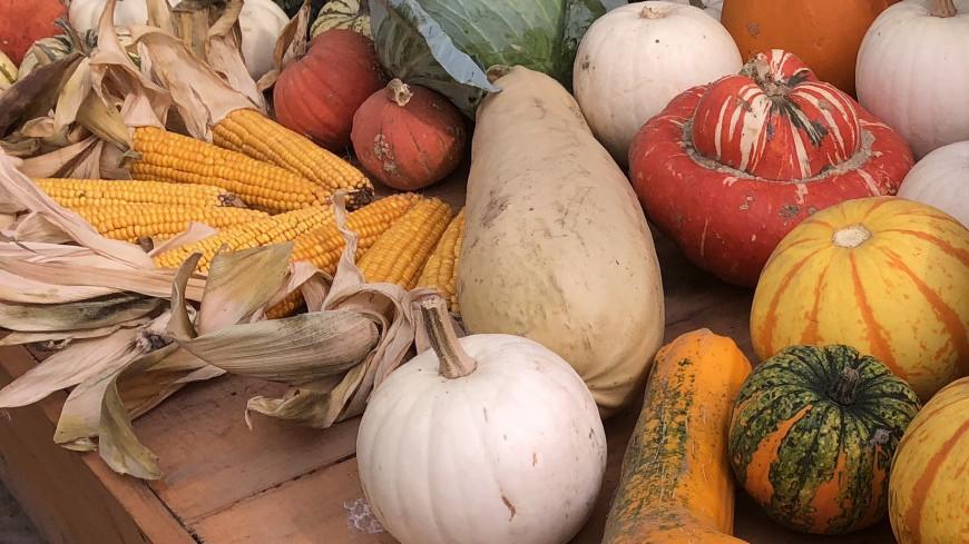 Выставка «Мир! Труд! Урожай!» в «Аптекарском огороде»