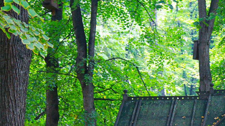 москва, город, улицы, архитектура, парк, природа, прогулка, деревья, сквер, аллея, дорожки, отдых, скамейки, лавочки, скамейка, люди, толпа, отдыхающие, народ, прогулка, выходные,