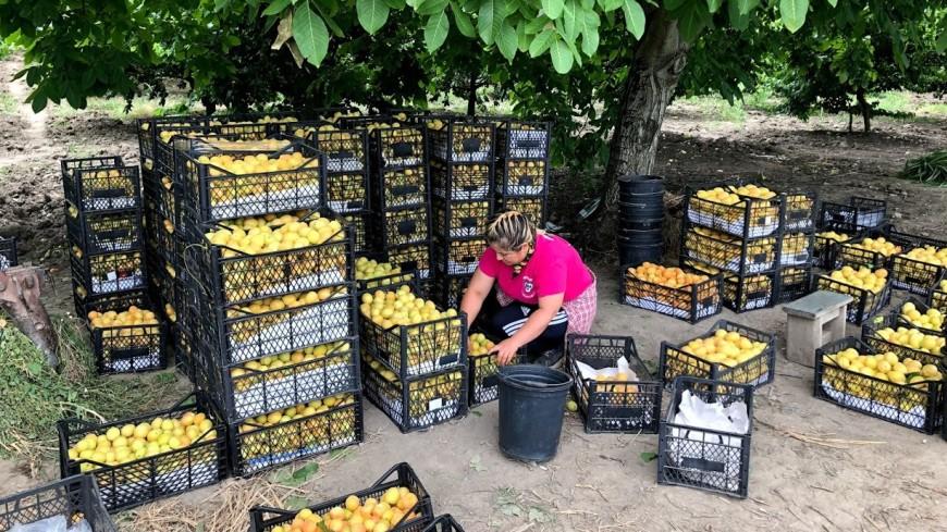 Пандемия в пользу. Грузинские фермеры за импортозамещение