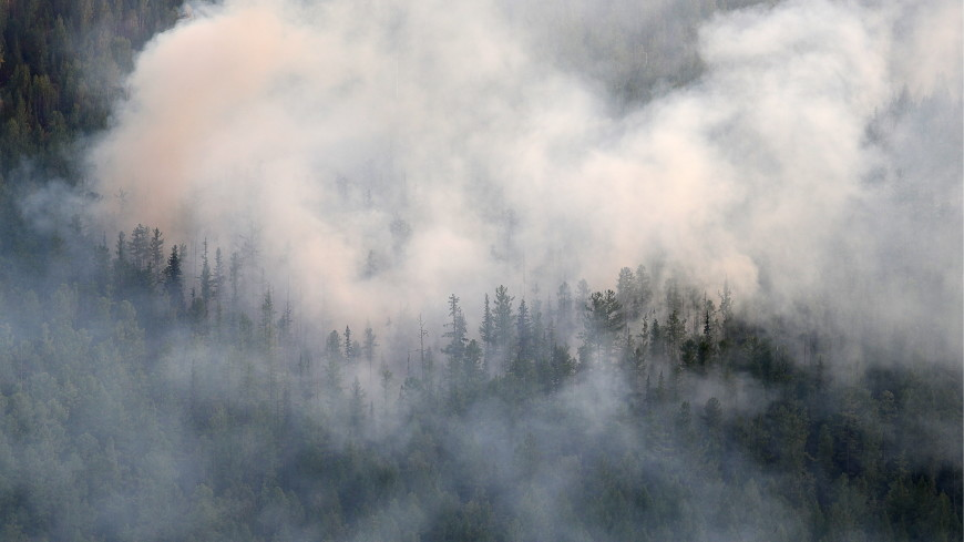 Площадь лесных пожаров в России на удаленных территориях достигла миллиона га