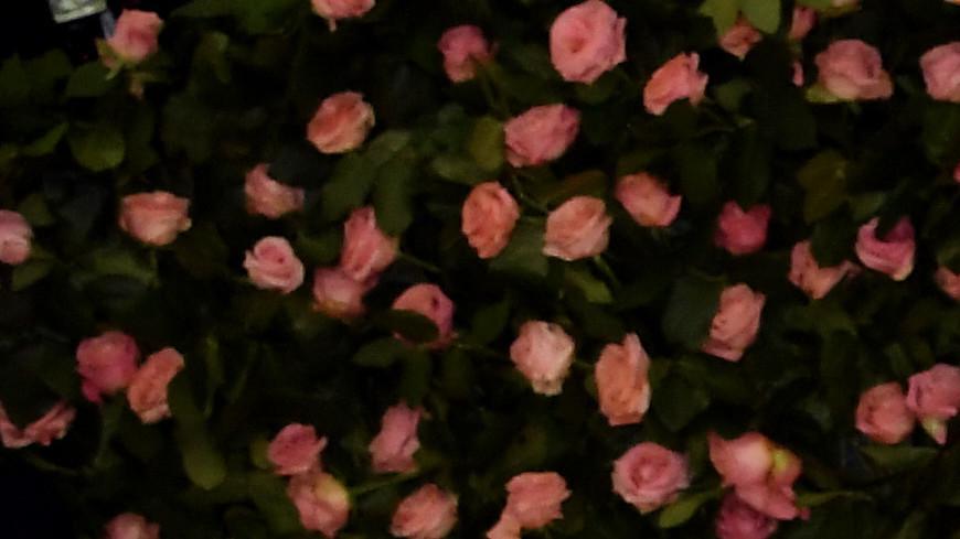 Ридли Скотт снимет фильм о Гуччи с Леди Гагой в роли вдовы дизайнера