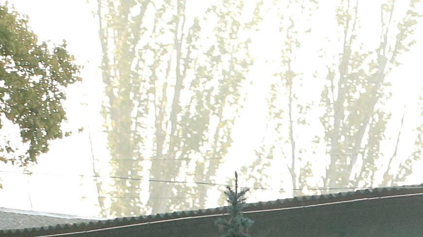 «Вел себя странно»: соседи, отец и бабушка керченского стрелка рассказали о его характере