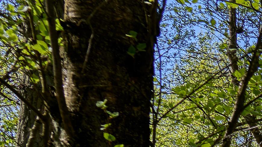 Торфяные болота в Европе начали пересыхать