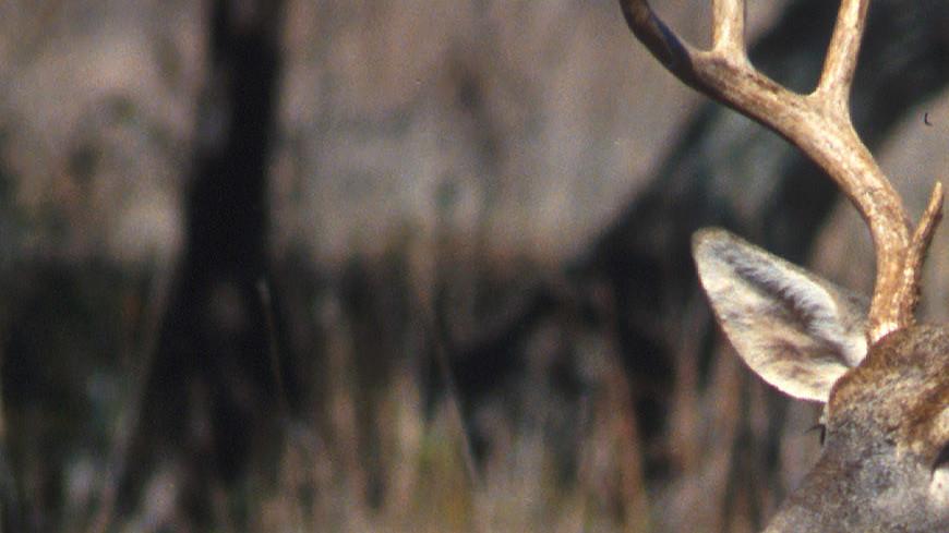 В Финляндии из-за оленя столкнулись два бронетранспортера