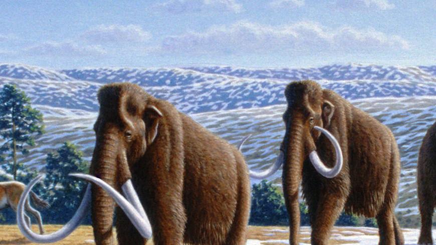 В Мексике нашли 200 полных скелетов мамонтов