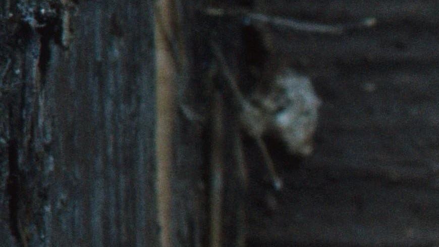 Белки уже не те: крыса забралась на дерево и заглянула в окно многоэтажки